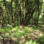 Sentiero 241 - Discesa nel bosco