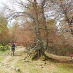 Pollino trek - Salita al Colle di Gaudolino