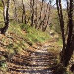 Sentiero 293 - Boschetti di faggi