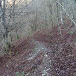 Sentiero 283 - Boschi dopo la Costa del Ranco Giovannello