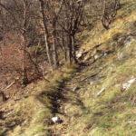 Sentiero 283 - Brevi boschetti verso la costa del Ranco Giovannello