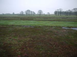 GRN sedum field in winter