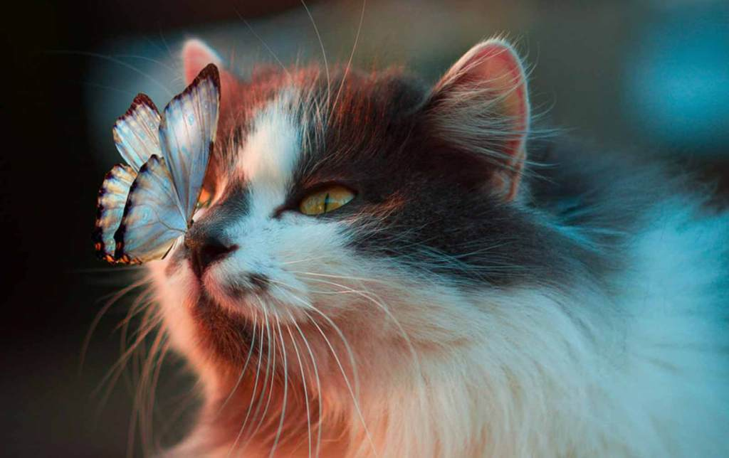 A cat with a butterfly on its nose