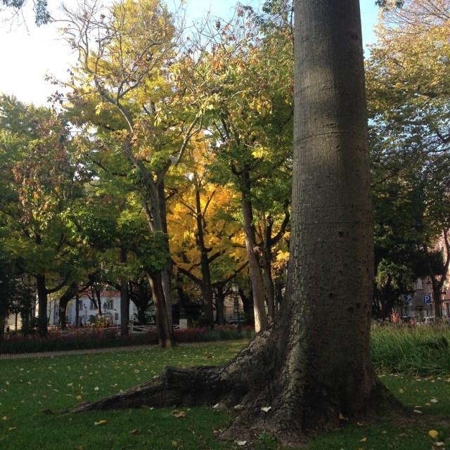 Ein Maulbeerbaum? Möglich im Maulbeergarten des Straßenbezirks Largo do Rato in Lissabon.