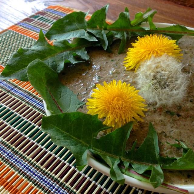 Bitterstoffe zum Löffeln: Ein grüner Smoothie mit selbst gesammeltem Löwenzahn.