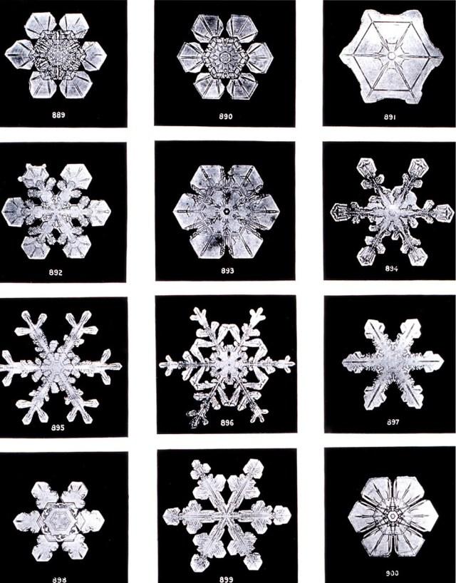 Gefrorenes Wasser hat viele Gesichter: 12 verschiedene, 6-fach-symmetrische Schneekristalle  (Bild von WikiImages auf Pixabay.com).