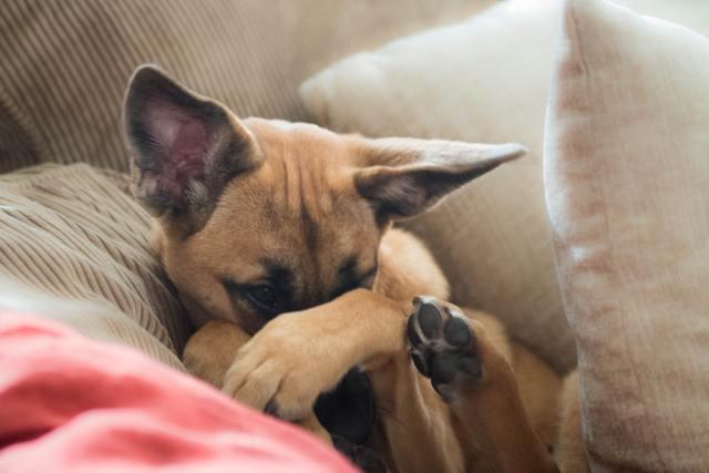 Nimmt jemand nicht Anteil an Dingen, die uns wichtig sind, kann er nicht mit unserer Sympathie rechnen (Photo by Lesly Juarez on Unsplash.com).