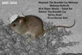 1st Mammal Species goes Extinct courtesy of Climate Change | GreenSutra | India