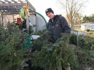 image of Christmas trees
