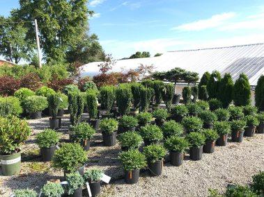 garden-center-trees