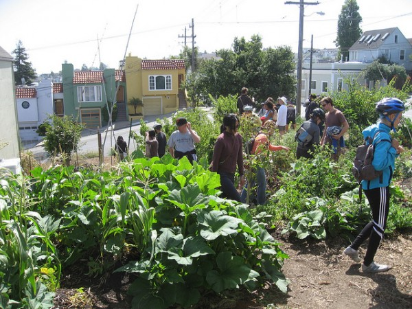 Permaculture San Fransisco