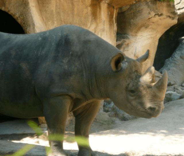 5 Reasons To Love Cincinnati Zoos Easter Celebration