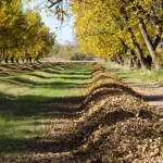 GVPC fall orchard