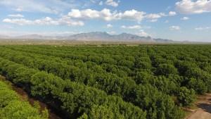 Sahuarita Pecan Festival Raises $18,000 for Community