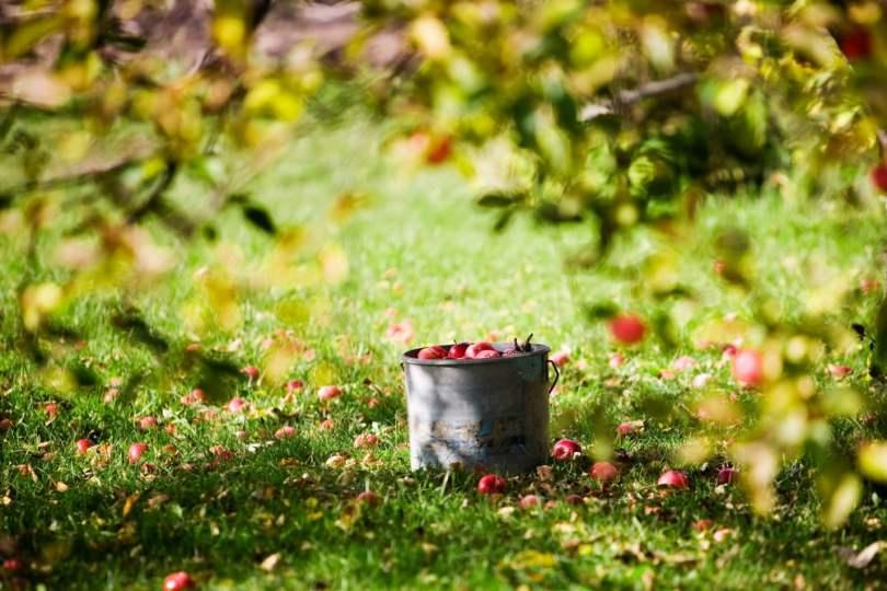 verger pommes