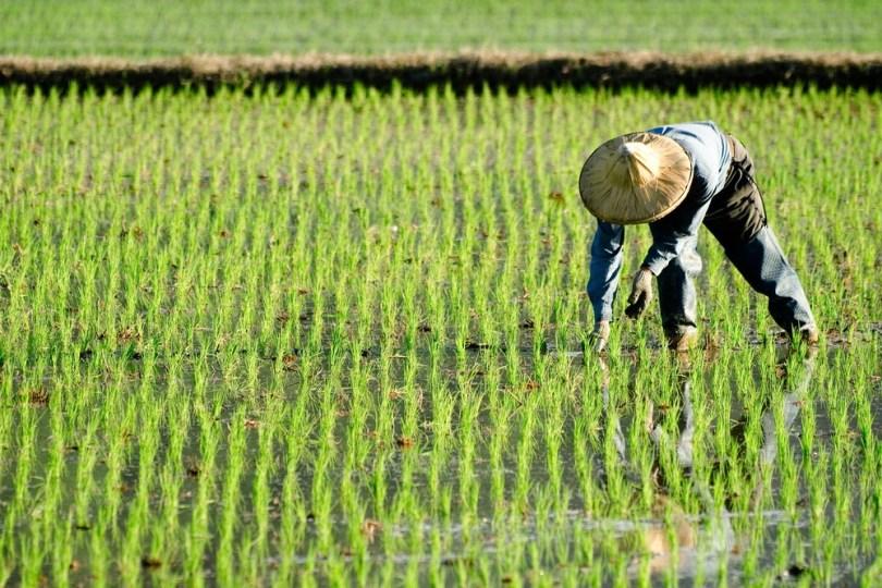 culture de légumes en Chine