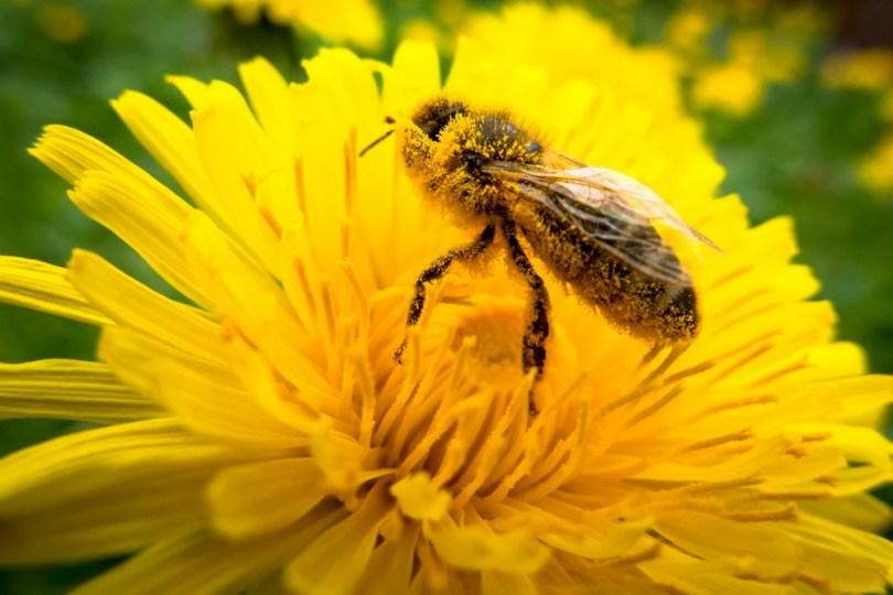 Activités de plein air enfants : semer des graines mellifères