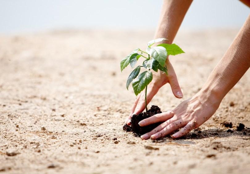 Rituel saisonnier : planter des graines