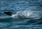 Surfrider Foundation, agir ensemble pour l'Océan