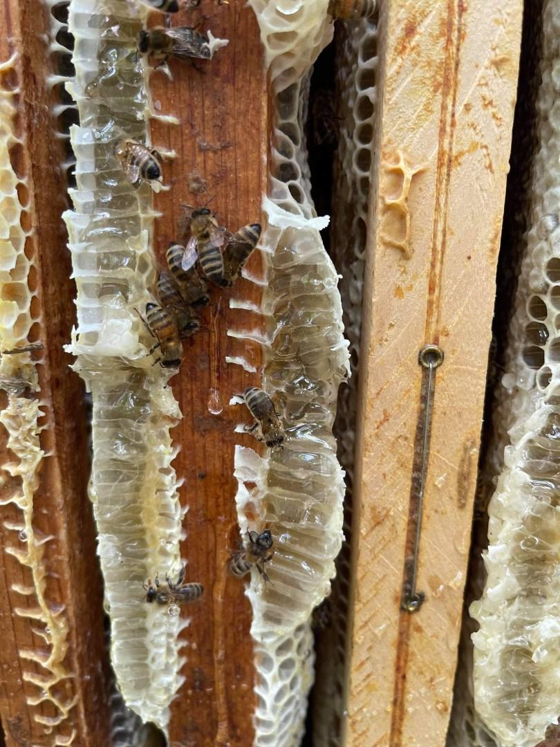 Les abeilles et les ruches