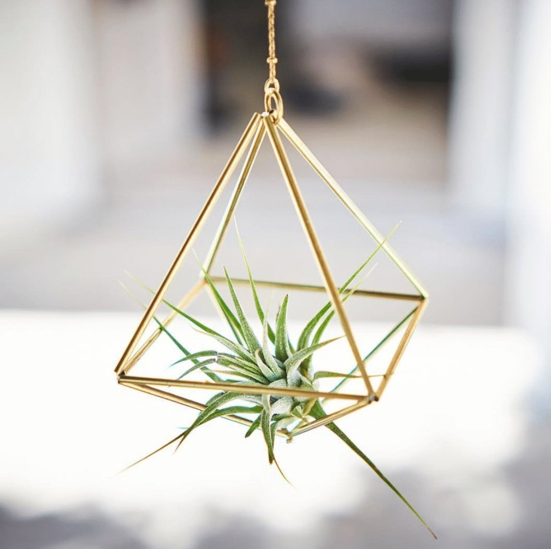 Air plant hanger Himmeli Octahedron No01 and Tillandsia Ionantha by Fuxigold