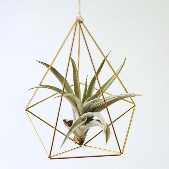 Air plant holder Himmeli Decahedron Nr02 by Fuxigold