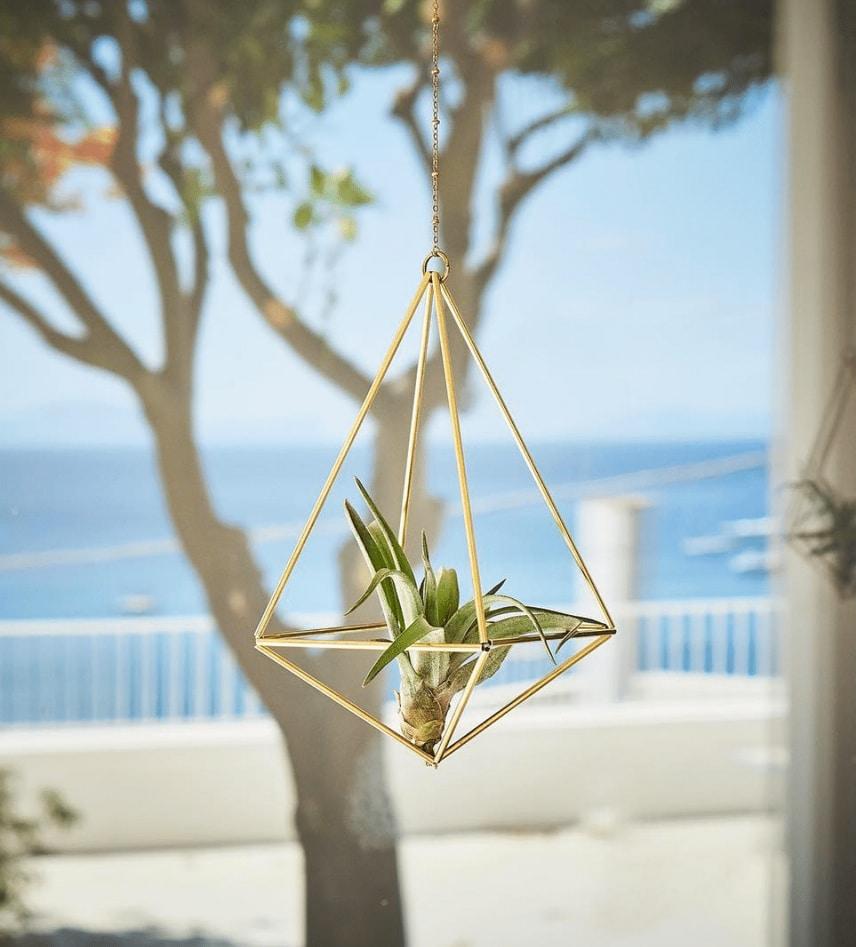 Air plant holder Himmeli octahedron 02 and tillandsia brachycaulos by Fuxigold