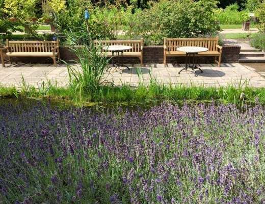 Lavander garden at Delft Botanical Garden - Photo by Mickey Gast
