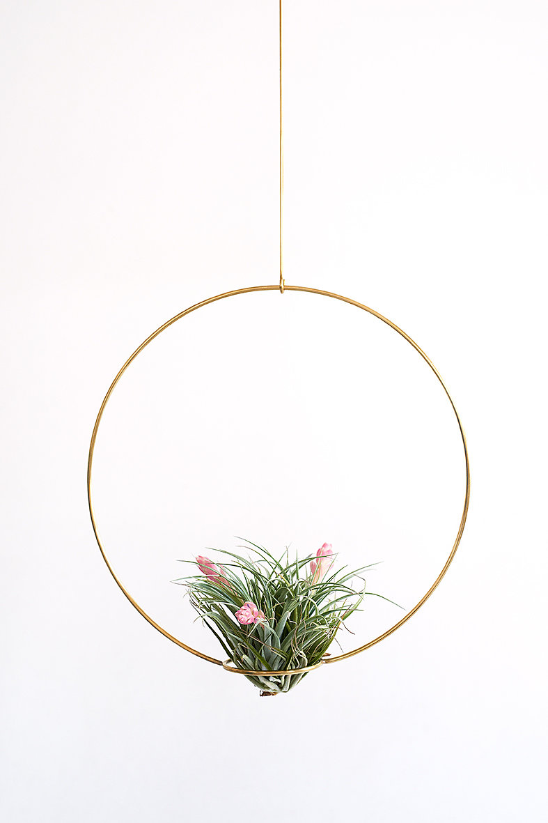 Airplant display from Studio Hali-Ann Tooms (T.silver)