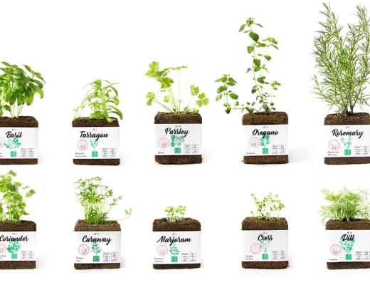 Lifi Compostable Herb Packaging designed by Edmundas Jankauskas