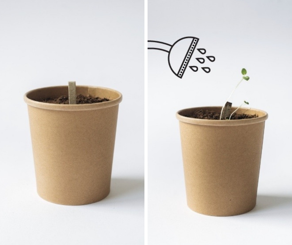 Plantable Packaging from Rhoeco (Tea Makers) 0