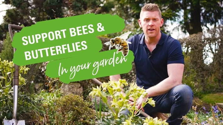 Support bees and butterflies in your garden