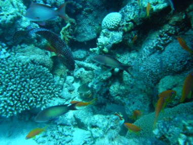 Moses Rock Reef