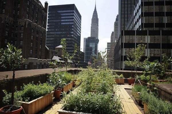 earth-day-urban-farming-new-york-rooftop_51631_600x450