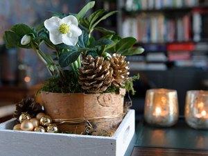 Kerststuk met helleborus