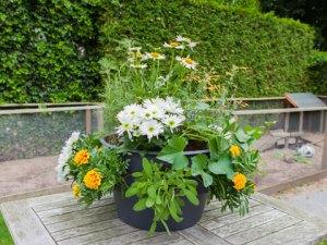 Koken met producten uit eigen tuin