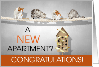 Congratulations On Your New Apartment Cards From Greeting