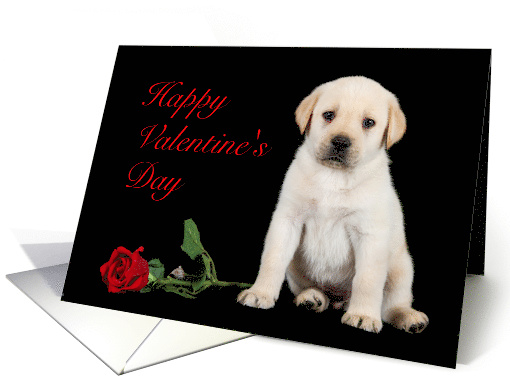 Happy Valentines Day Red Rose Yellow Lab Puppy Card