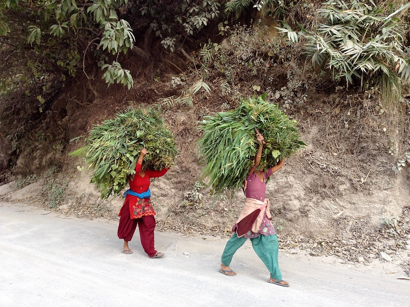 Women carrying grass for cows - Rishikesh
