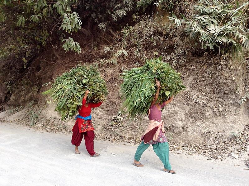 Women carrying grass for cows - Rishikesh