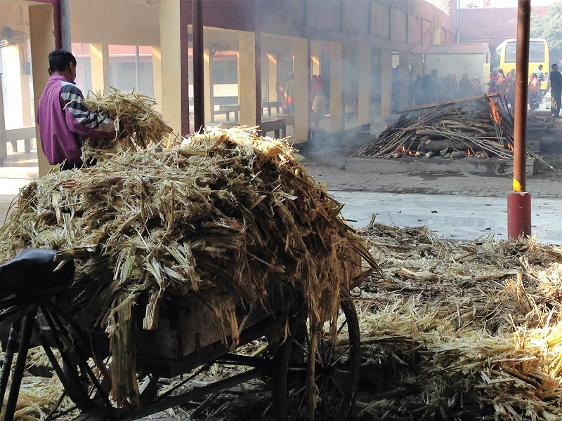 Bagasse biofuel used during the cremation process