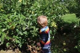 patterson-fruit-farm-2016-8