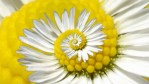 fibonacci series in nature