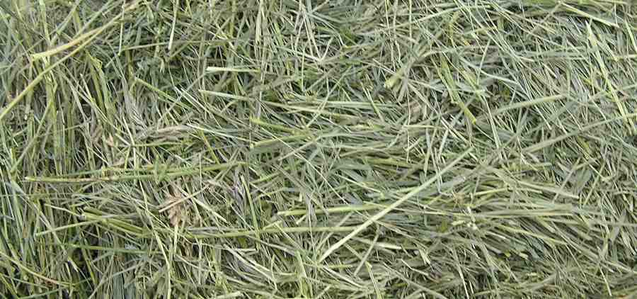 All that hay, but where is the needle?