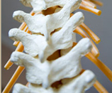 this may look like a spine but it's 20% of your brain