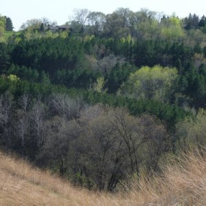 Wooded hillsides