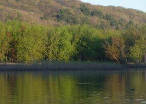 Green haze on riverside trees