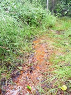 Spruce Road acid mine drainage