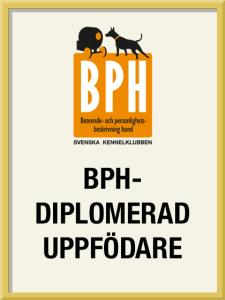 Stolt första varghundskennel att få titeln BHP-diplomerad uppfödare