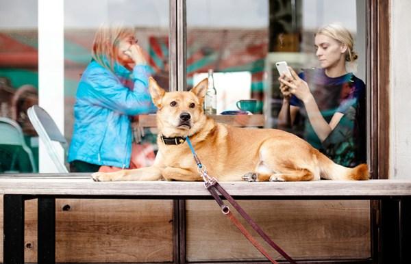 Què respondre al client quan ens pregunta: el gos pot entrar?